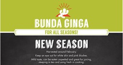 Infograph - Bunda Ginga for All Seasons feature image